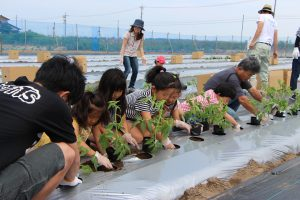 親子でトマト苗植え体験