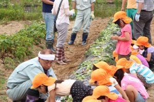 第一保育所でサツマイモ苗植え