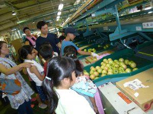 選果場を見学する児童ら