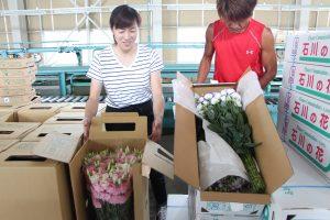 トルコギキョウを出荷する生産農家