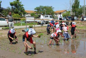 田植えに挑戦する児童ら