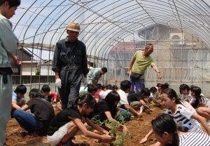 トマトの苗を植える児童ら