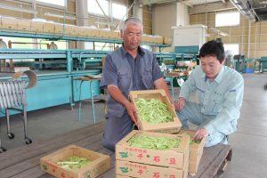 この日出荷された千石豆